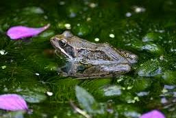 Nature & Ponds