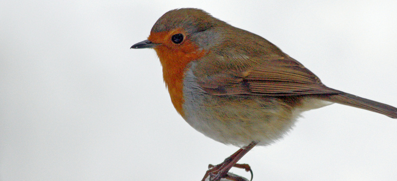 what birds to look for in your garden this winter