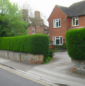 Hedges & Trees