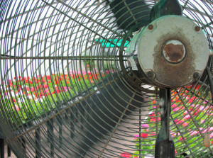 ventilation in your greenhouse