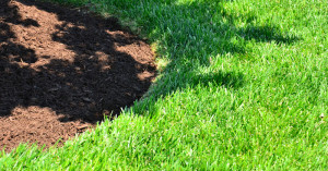 How To Maintain Your Lawn