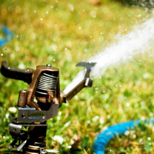 Sprinklers & Lawns