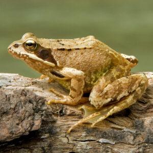 Frog & Pond