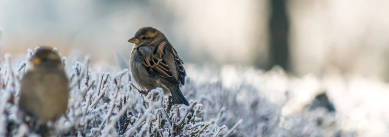 how to attract birds to your garden this winter