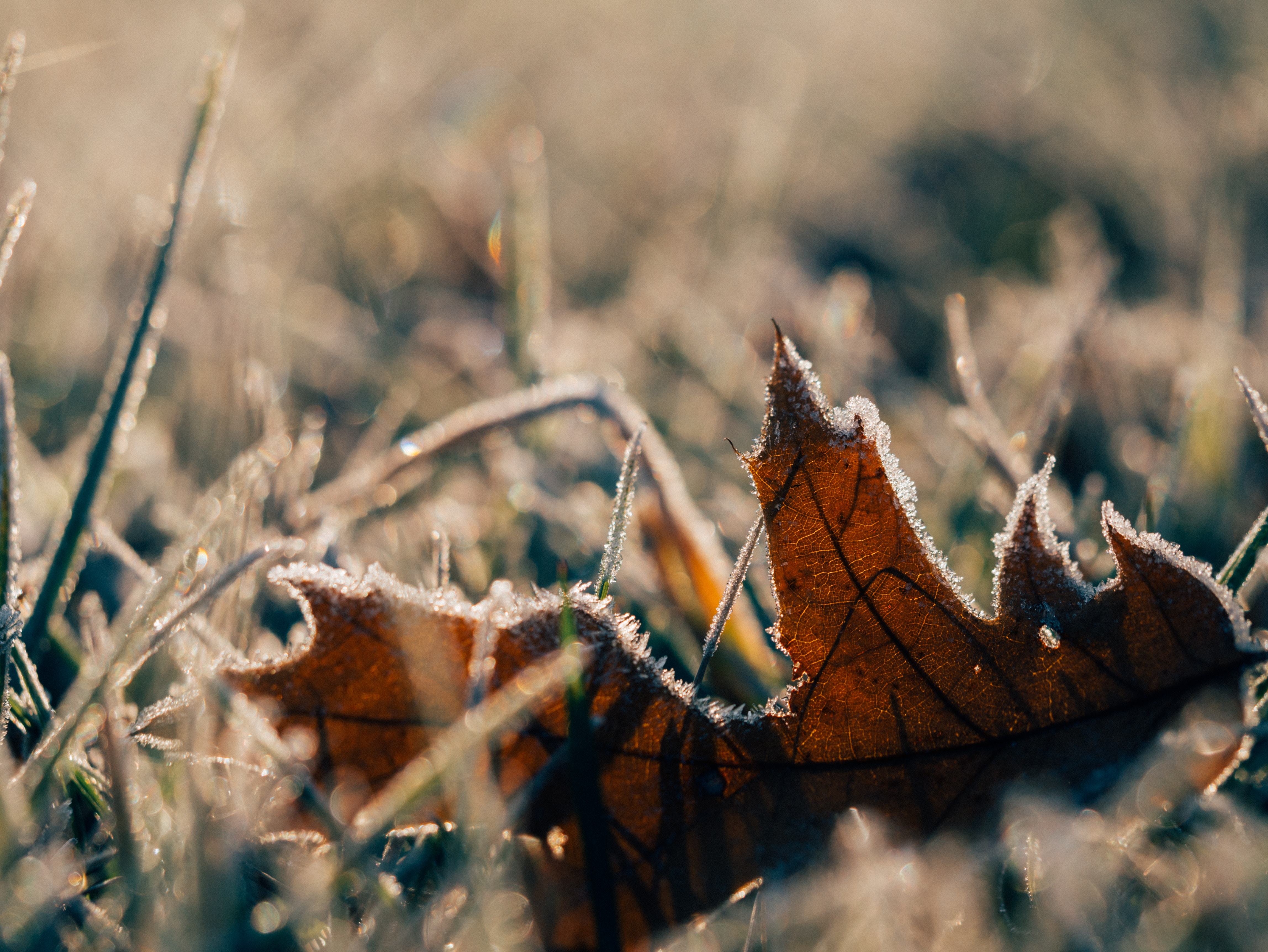 how to prepare your garden for winter gardening tips minster